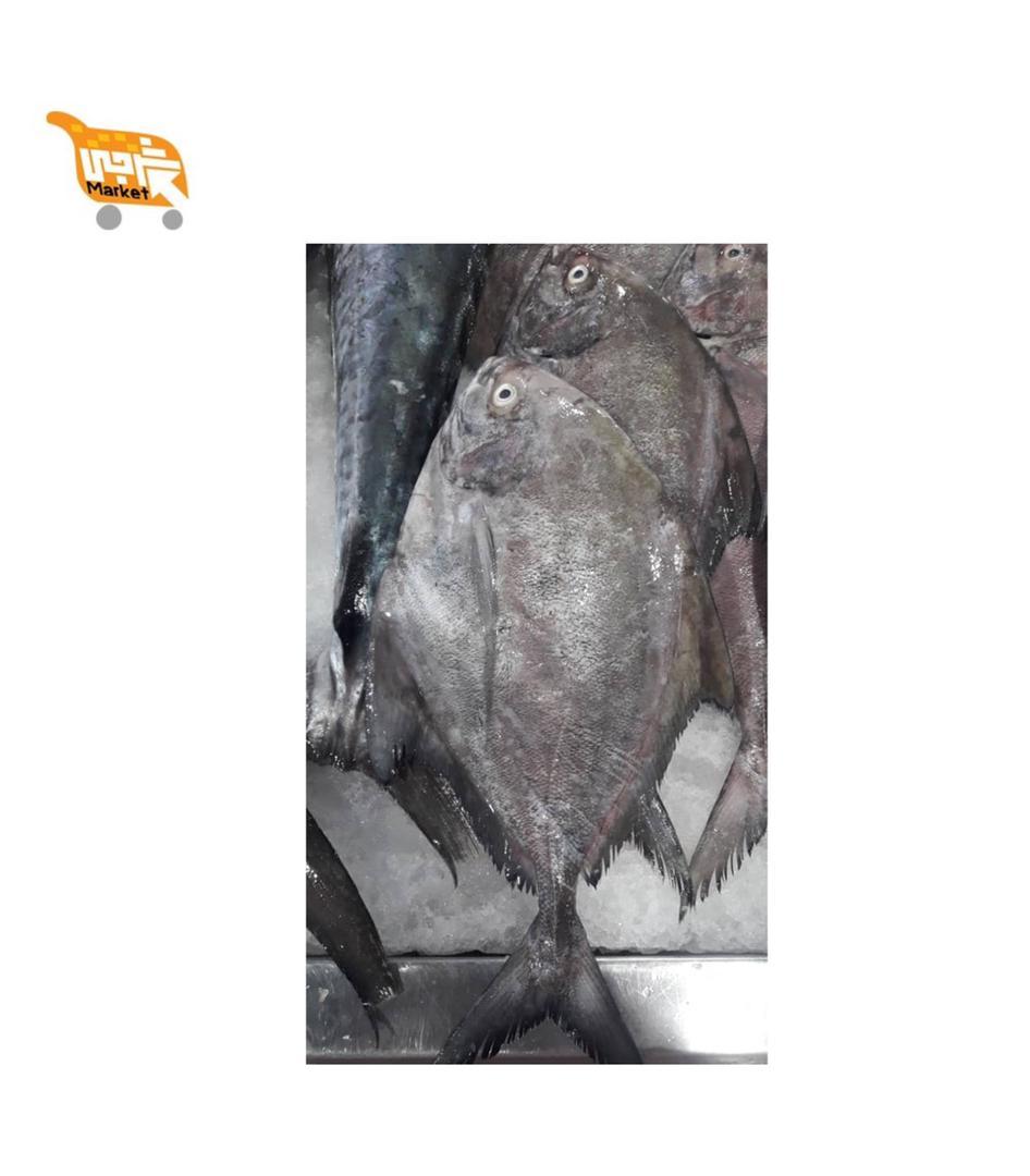 ماهی حلوا سیاه کیلویی