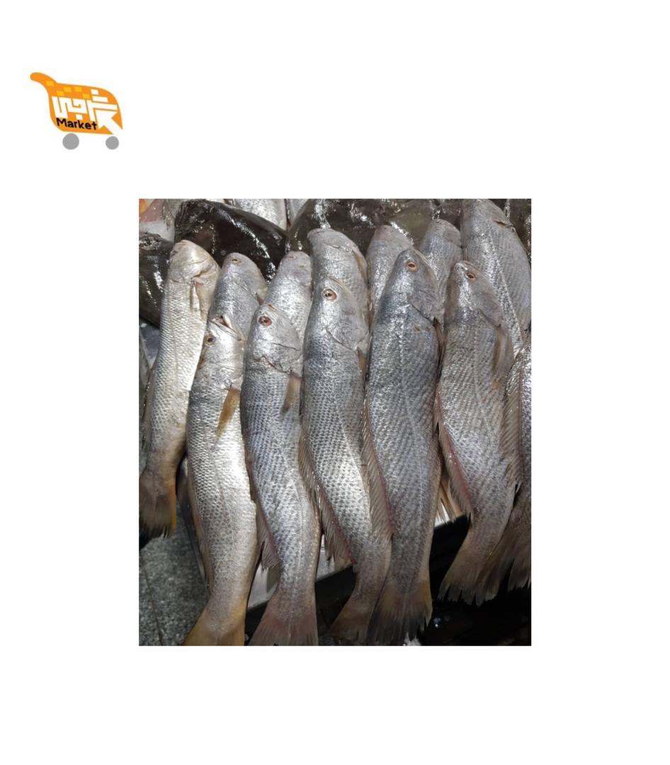ماهی شوریده کیلویی