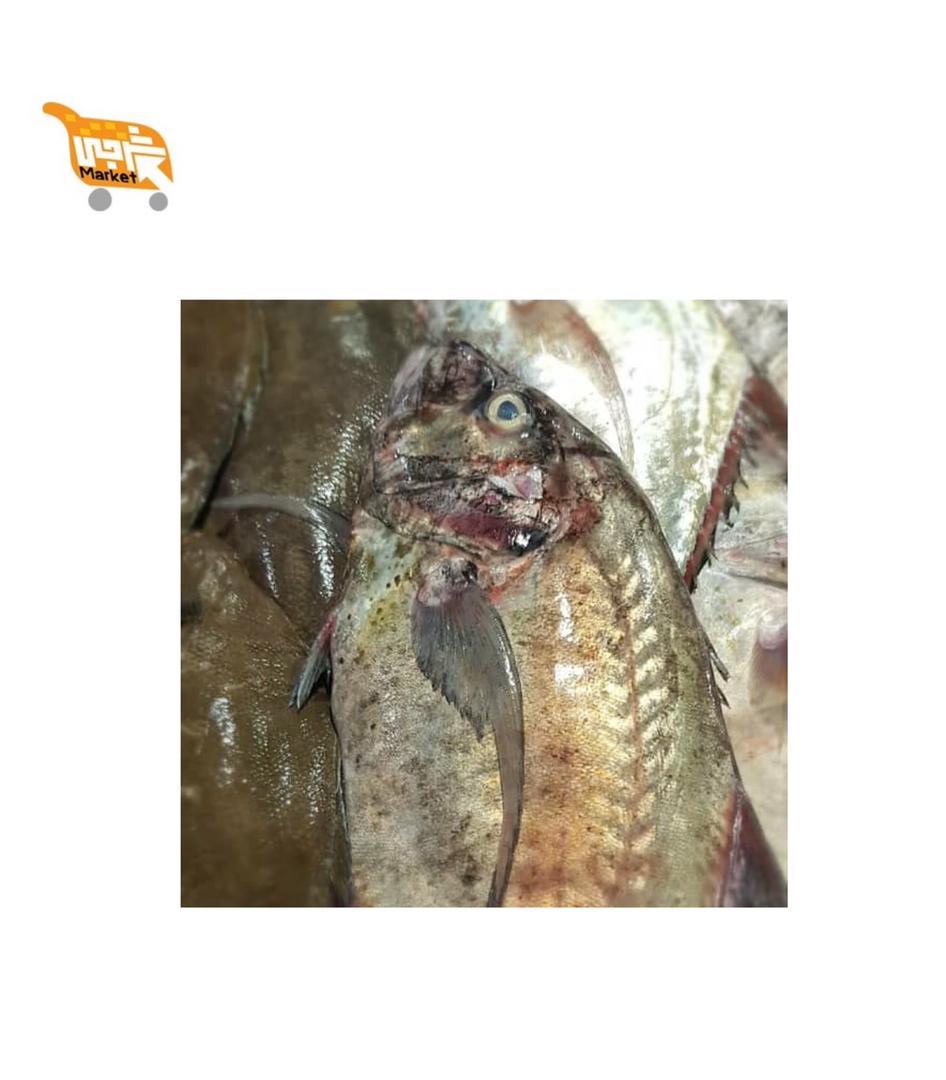 ماهی مقوا کیلویی