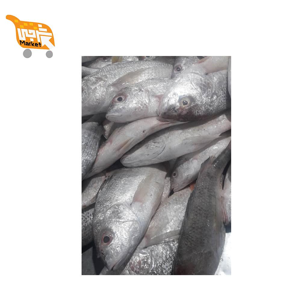 ماهی سنگسر کیلویی