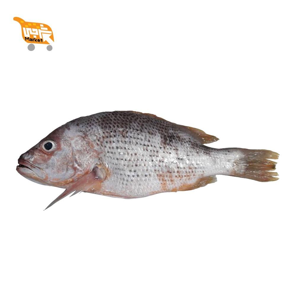 ماهی سرخو محلی کیلویی