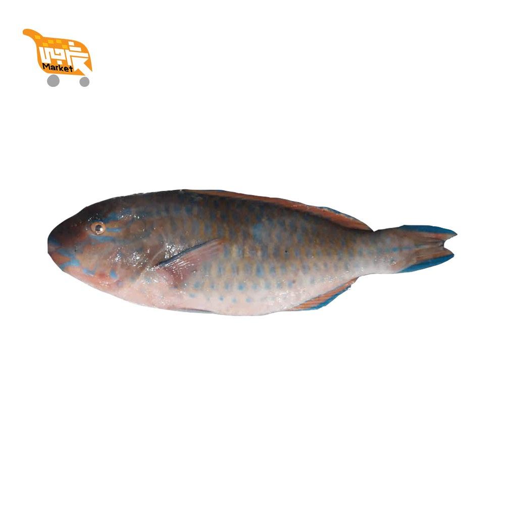 طوطی ماهی کیلویی