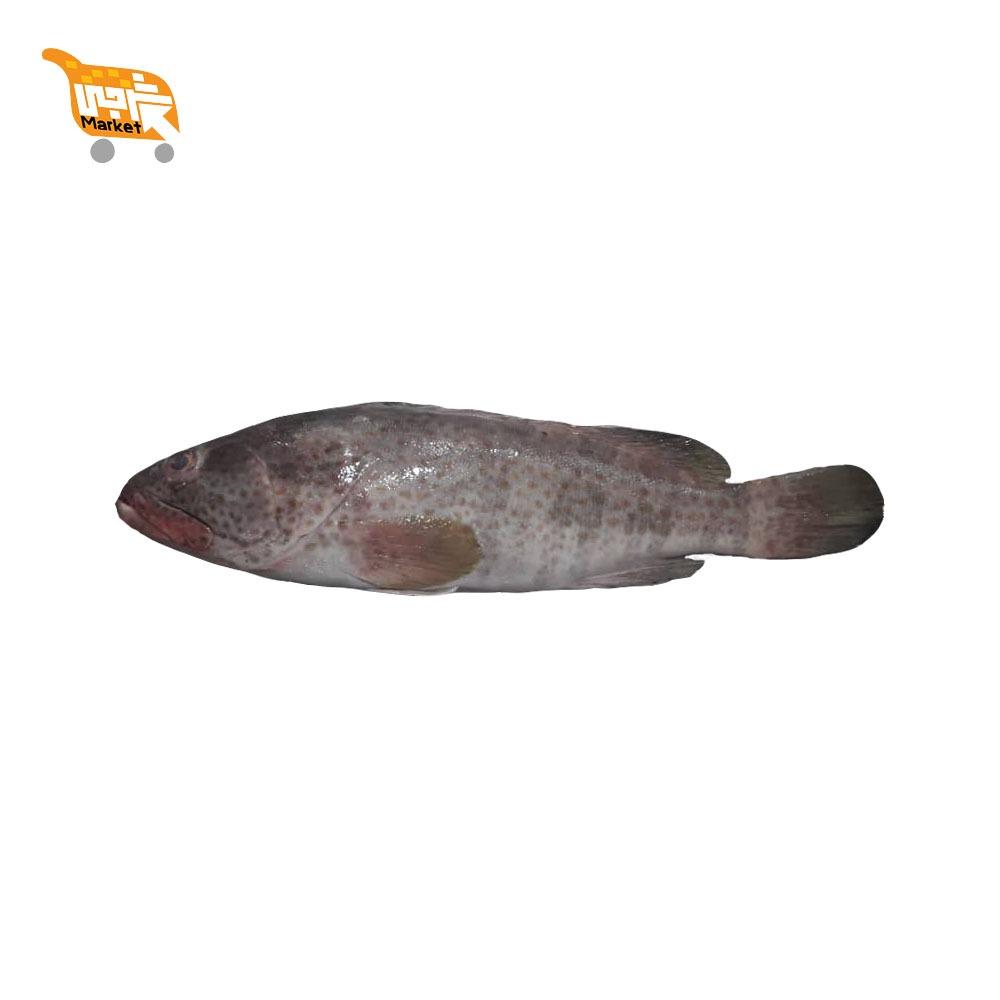 ماهی هامور کیلویی