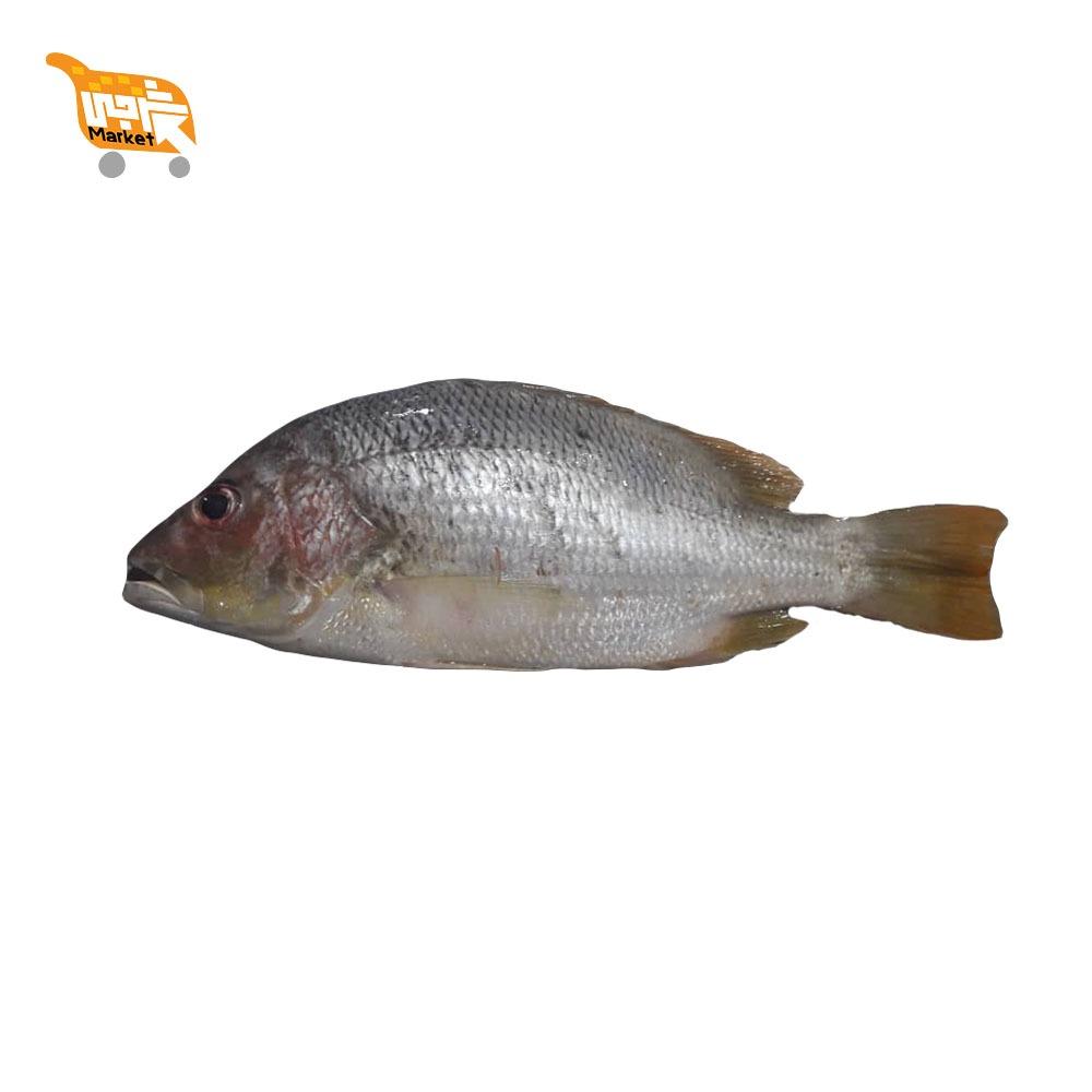 ماهی سرخو پرسی کیلویی