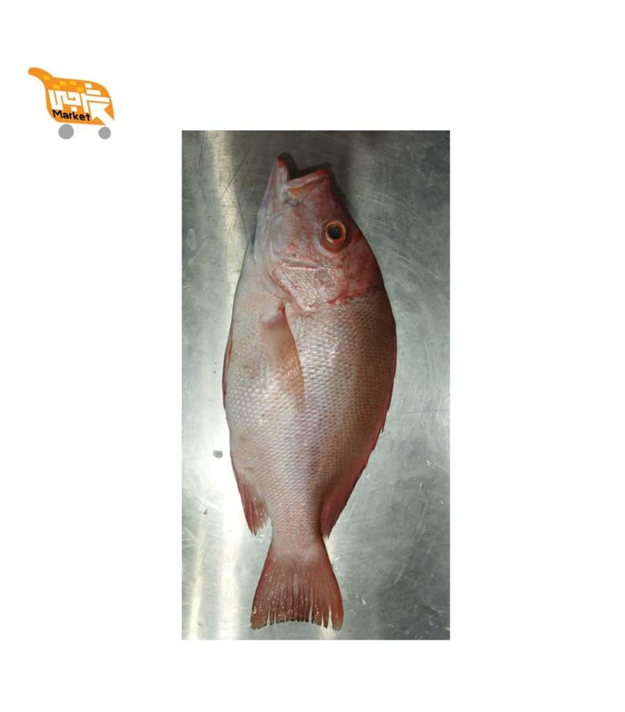 ماهی سرخو چمن کیلویی