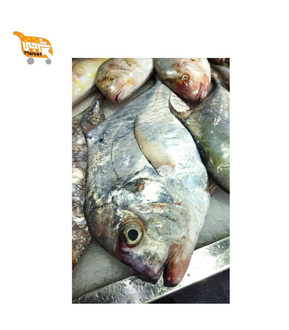 ماهی مقوا قاضی کیلویی